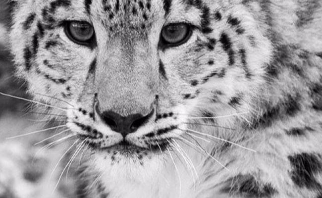 Jake Kaiser - Panthera