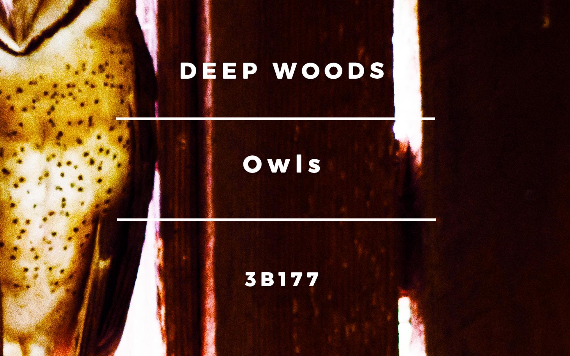Deep Woods - Owls