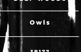 Deep Woods - Owls
