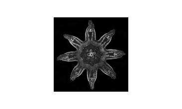 Nanonoise - Cocoon