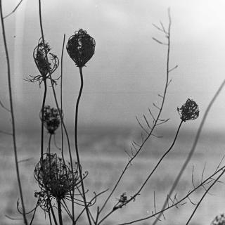 Recondite – Placid